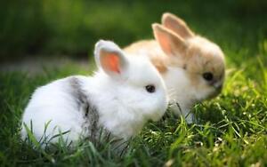 Wanted: Baby bunnies