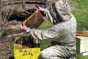 Honey Bee Beekeeping Course