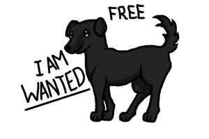 PLEASE anyone willing to give a free.dog away