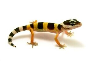 List of Reptiles For Sale