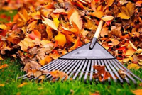Affordable Raking and Leaf Removal Services for as low as $29.99