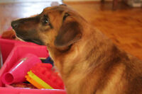 Boomer. Visually Impaired Dog Seeks Calm, Understanding New Home