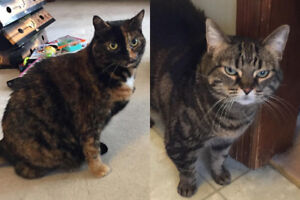 Roxy and Lexi. Lovely Cats In Need Of Foster/Perm Home(s)
