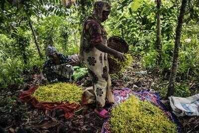 Naturreines Ylan Ylan Öl original von den Comoren