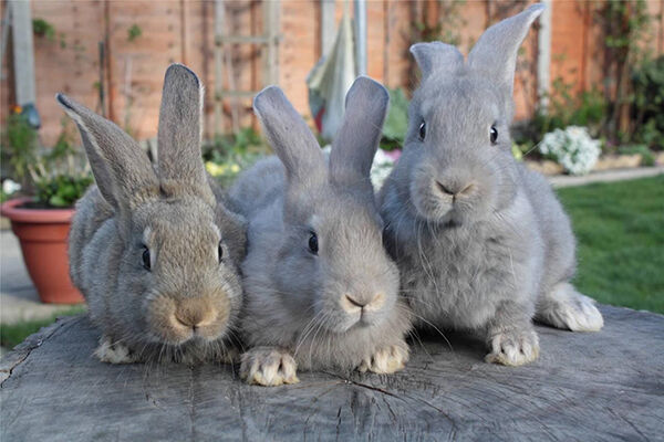 How To Choose The Right Breed Of Rabbit For You