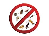 Pest Control - East London, Essex and surrounding areas