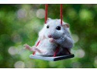 Hamsters sitter / pension
