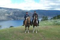 Horse Boarding in Summerland