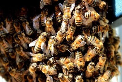 Bee Hive and Swarm Removal and Relocation Kelmscott Armadale Area Preview