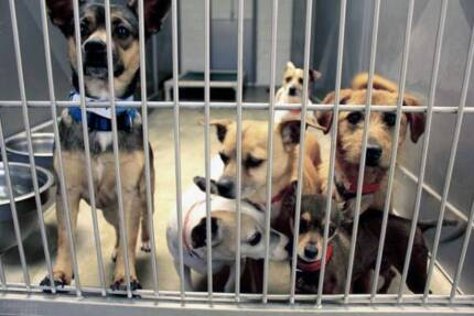 RESCUE DOGS LOOKING FOR HOMES