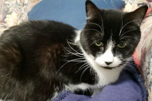 Selena. Affectionate And Total 'Lap Cat' Is In Need Of New Home