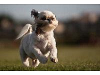 Dog Walker and Pet Sitting/Boarding