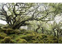Dartmoor Weekend