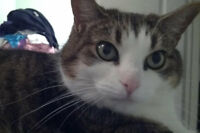 Janey. Sweet Cat With Love To Share Seeks New Home