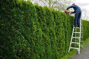 Cedar Hedge Trimming Cornwall Ontario image 7