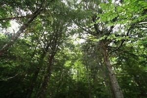 Land for Sale in Greenhill- close to Forest Hills!!!