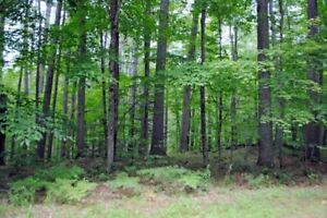 WANTED - WOODED LOT TO BUILD ON