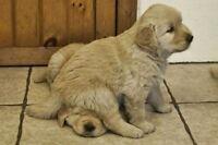 Lacombe Pet-Sitting & Dog Walking