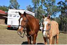 ASH Reg Quiet Mare and her rising 3yr old filly Rosewood Ipswich City Preview