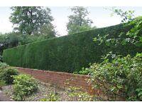 Rmlandscapes ~ fencing ~ decking ~ grass cutting ~ garden tidy ups ~ hedge cutting ~