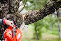 Tree removal - 20% off!