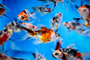 Cash for aquariums, equipment and accessories and fish of all si