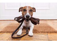 Dog walking, Petsitter/overnight boarding, feeding and having fun with dogs !