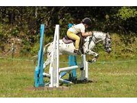 Reg British spotted pony
