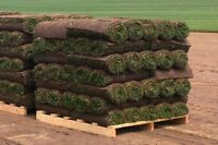 SOD FOR SALE - NORTHERN NB DELIVERY