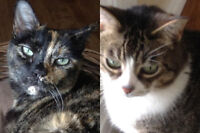 Gypsy And Sammie. Social Felines Seeking Attentive New Home