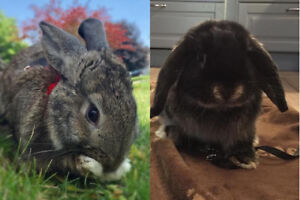 Eeyore and Bunny. Home Urgently Needed For Young Rabbits