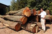 *Free* willow wood logs dump delivered