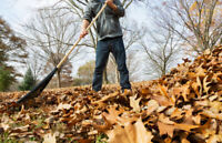 Leaf Cleanup - Fall leaf removal
