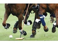 POLO GROOMS Required for 2017 Season