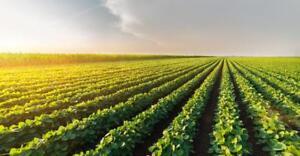 Farmland Rental in Huron County