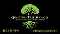 Quantum Tree services/bobcat