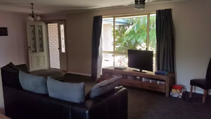 150pw Sippy Downs Internet & Elec* Inclusive Sippy Downs Maroochydore Area Preview