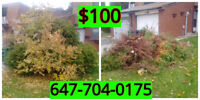 $100 YOUR PRICE. tree  removal. TREE CUTTING ALL CITY GTA
