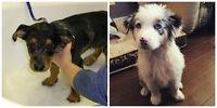 Puppy First Bath Special