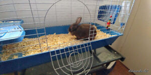 Moving - Bunny for sale!!!