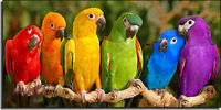 Parrots wanted for Purchase