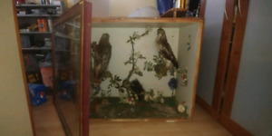 Taxidermy birds 400 o.b.o