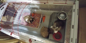 2rabbits plus cage for sale 50$