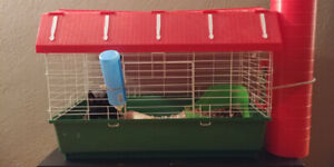 Bunny for SALE including cage, food etc