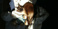 Trustworthy Pet & House Sitting - March Break vacation or other