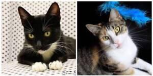 AC0936/AC0935 : Daisy/Dixie - CATS to ADOPT - Vet Work Inc.