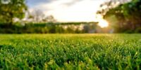 Lawn care serving Florence, North Sydney, and Sydney mines
