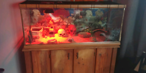 120? Gallon terrarium and leopard gecko