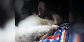 Missing cat Southwick