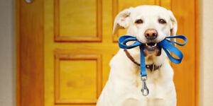 *Experienced dog walker*** Promeneuse de chiens d expérience*